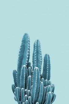 Cactus sobre fondo azul
