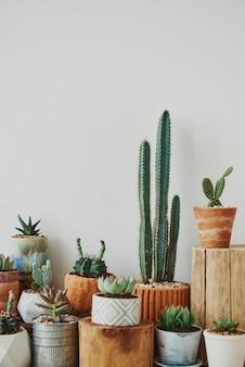 Cactus y suculentas mezclados en macetas pequeñas.