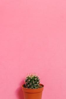 Cactus verde en maceta sobre fondo de color rosa pastel