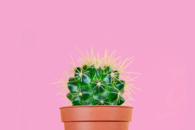 Cactus verde en una olla marrón y una navaja sobre un fondo rosa. el concepto de depilación, depilación y eliminación del vello corporal no deseado.