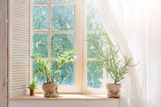 Cactus verde, suculentas en el alféizar de la ventana con luz suave