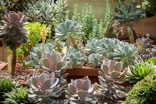Cactus verdes y suculentas enfoque selectivo primer plano