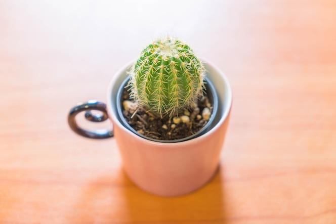 Christmas bunny fotos y vectores gratis for Cactus navideno