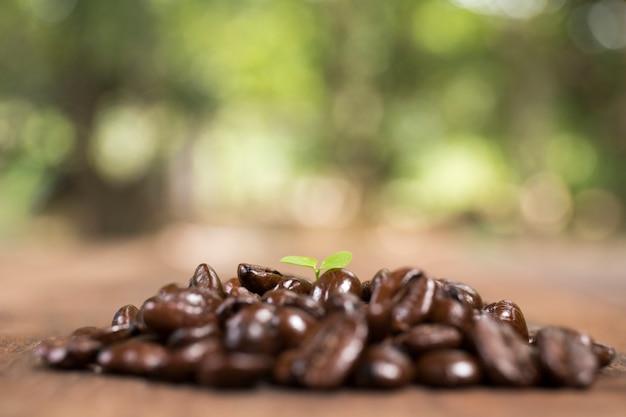 Cafeto y grano de café, concepto