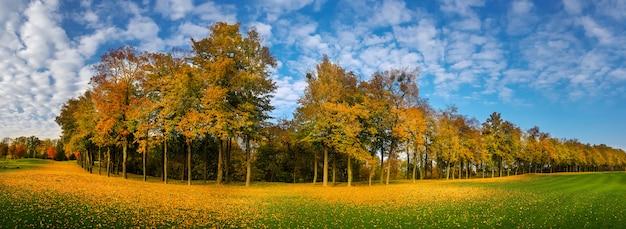 Caída de hojas amarillas, prado en el parque de otoño, panorama