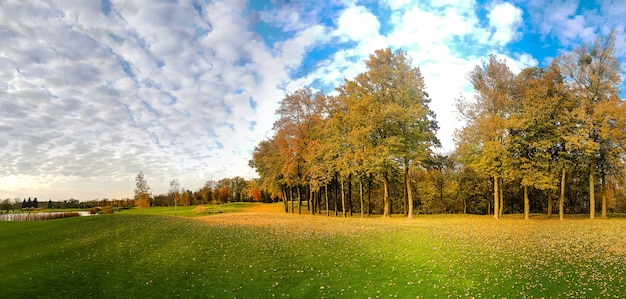 Caída de hojas sobre la hierba verde en el parque de otoño, panorama
