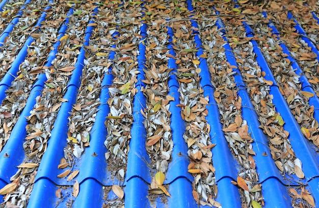 Caído de hojas secas en el techo de las tejas azules.