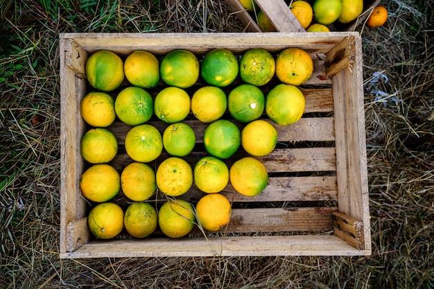 Caja de madera con frutas cítricas caseras jugosas maduras frescas. vista superior