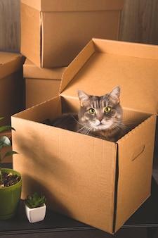 Cajas de artesanía para recoger cosas y mudarse a otro apartamento. nuevo concepto de vivienda y reubicación.
