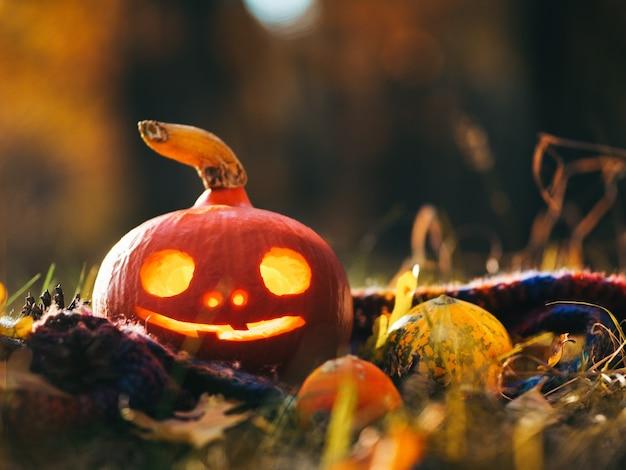 Calabaza brillante en el bosque de otoño