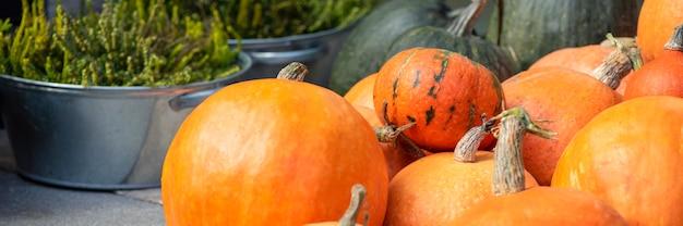 Calabaza de halloween. calabaza sobre un fondo de heno en estilo rústico. fondo para halloween. lugar para el texto. foto panorámica.