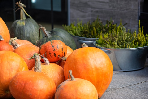 Calabaza de halloween. calabaza sobre un fondo de heno en estilo rústico. fondo para halloween. lugar para el texto
