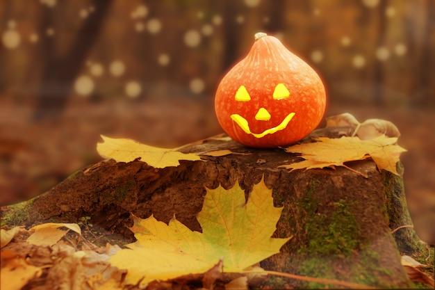 Calabaza de halloween (jack o linterna) en el bosque con hojas en la niebla.
