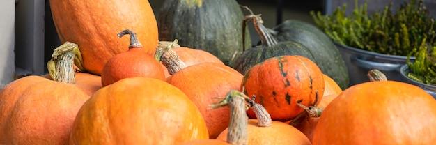 Calabaza de halloween sobre un fondo de heno en un fondo de estilo rústico para halloween panorami ...