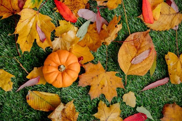 Calabaza y hojas en césped verde