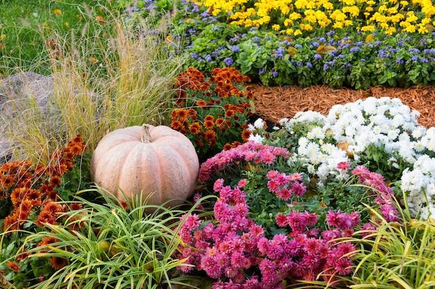 Calabaza madura grande que miente en la tierra en jardín entre las flores.