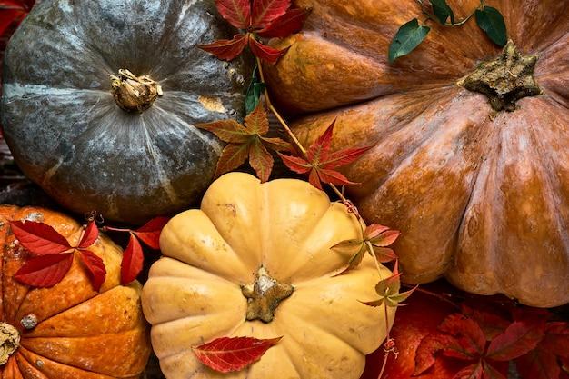 Las calabazas se colocan sobre la mesa y se decoran con hojas de sauce, vista superior de las frutas de otoño