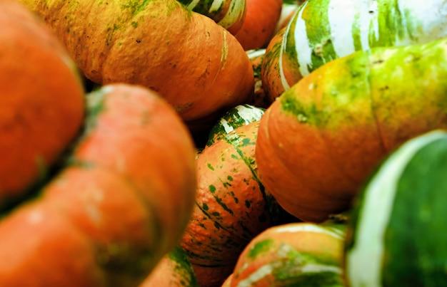 Calabazas naranjas verdes y amarillas.