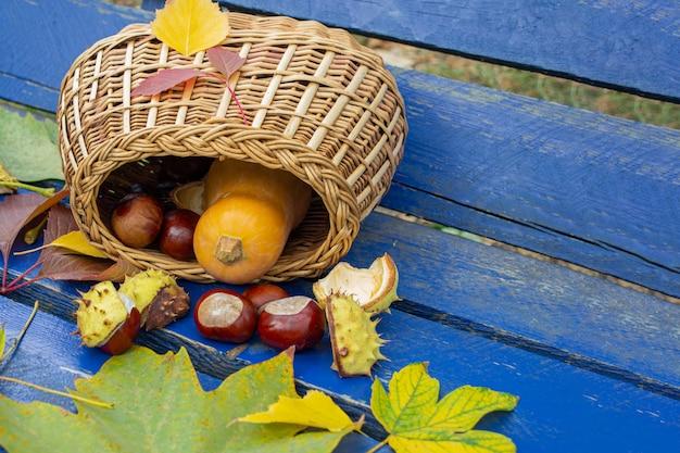 Calabazas de otoño, castañas en una cesta en el bosque viejo. amarillo, borgoña, hojas verdes de otoño. vacaciones de otoño