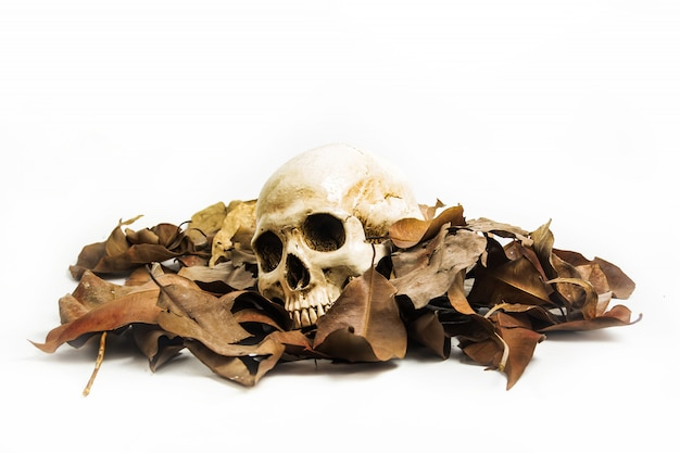 Calavera con hoja seca, naturaleza muerta.