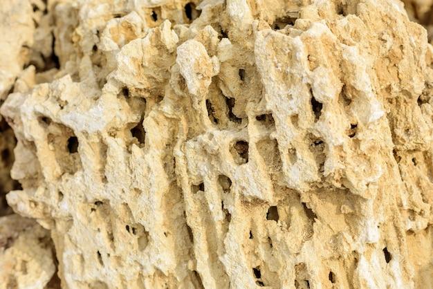 Caliza natural fosil