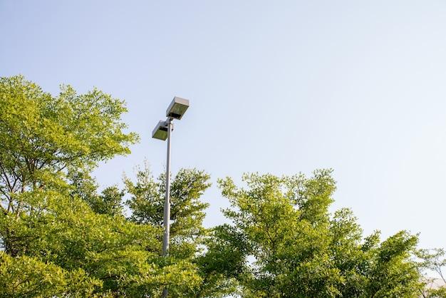 Calle árboles de la lámpara en el jardín tranquilo.
