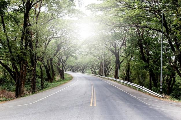 Calle en cubierta con ramas de árboles arqueados