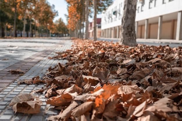 Calle con hojas caídas en el suelo y árboles al fondo.