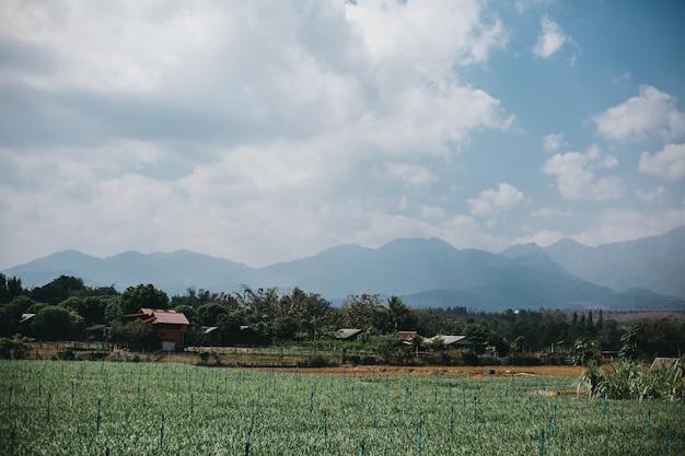 Calle tailandia, naturaleza