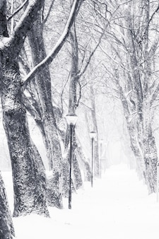 Callejón en nevado un día