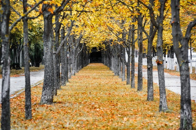 Callejón de otoño parque