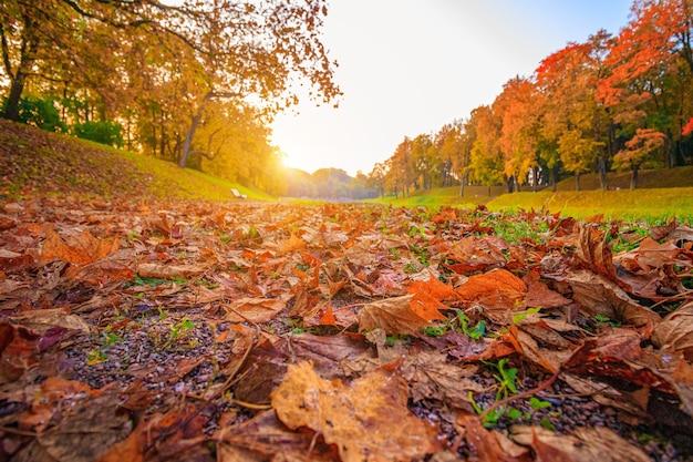 El callejón del parque de otoño