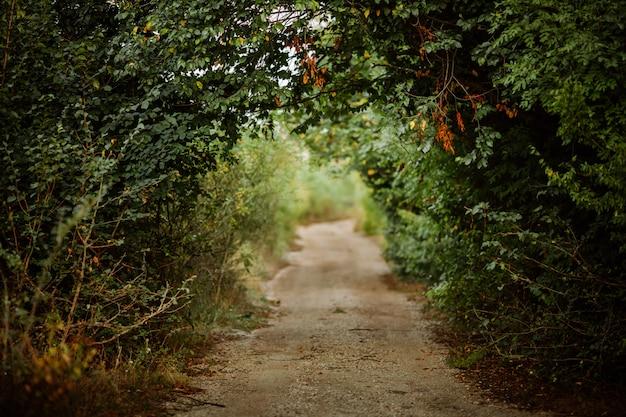 Callejón verde en el bosque