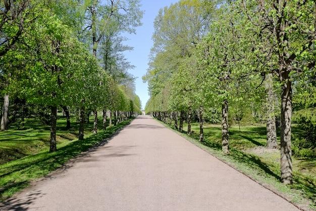 Callejones vacíos, parque cerrado durante la pandemia