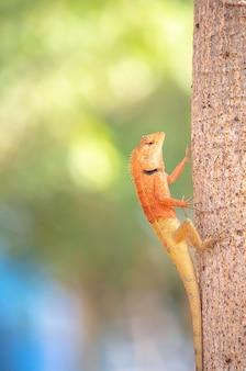 Camaleón naranja en un árbol fondo borroso hojas.