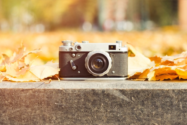 La cámara se encuentra en la acera en un parque de otoño con hojas amarillas