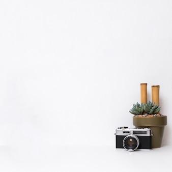 Cámara fotográfica y cactus sobre fondo blanco.