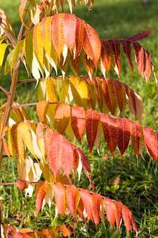 Cambiando de color a árboles rojos