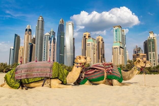 Camello en frente del puerto deportivo de dubai, emiratos árabes unidos.