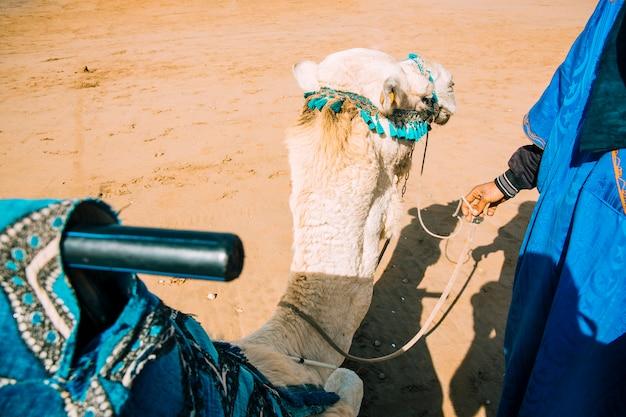 Camello en paisaje de desierto en marruecos