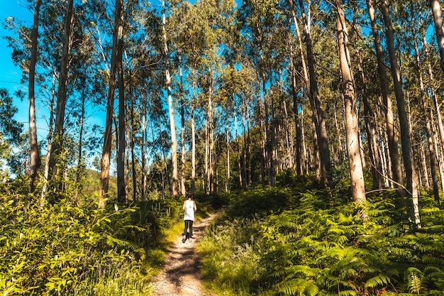 Caminando por el sendero del parque natural de listorreta en el pueblo de errenteria en el parque de las peñas de aya o el parque aiako harria. gipuzkoa, país vasco