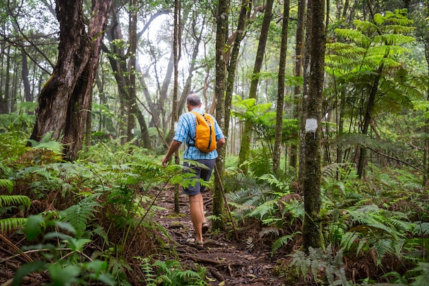 Caminante en el sendero en la selva verde, hawaii, ee.