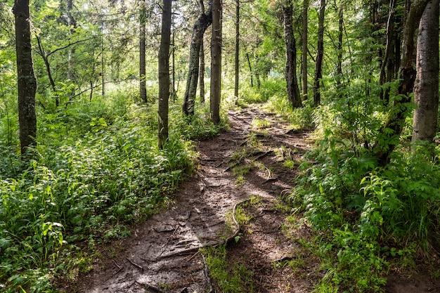 Caminata forestal con árboles