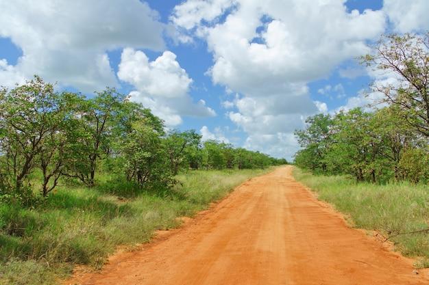 Camino africano en la sabana, sudáfrica, parque nacional kruger