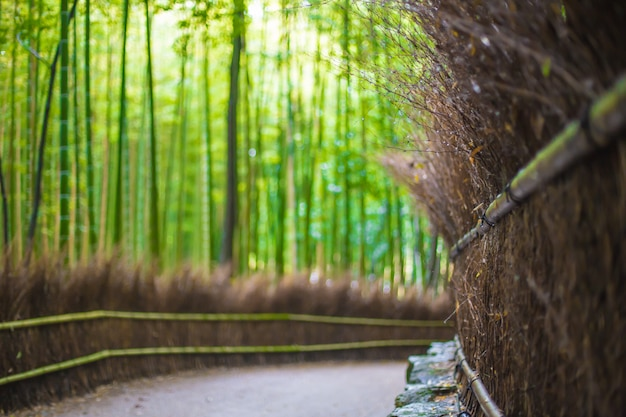 Camino al bosque de bambú, arashiyama, kyoto, japón borroso para el fondo.