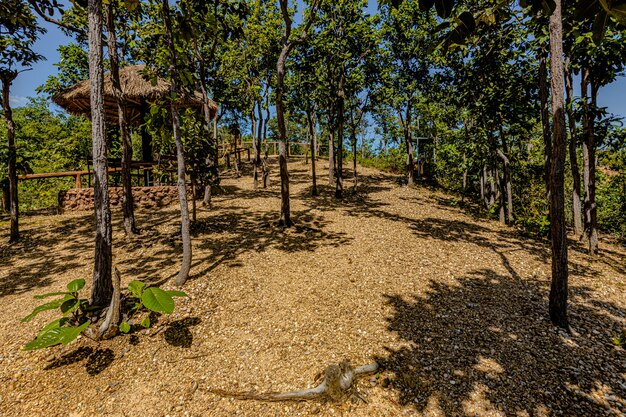 El camino al gran cañón pha chor en la provincia de chiang mai, tailandia
