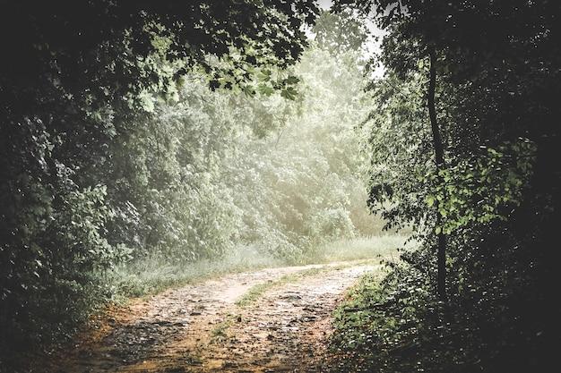 Camino en el bosque con un asiento abierto y con niebla temprano en la mañana en verano