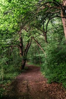 Camino en un bosque caducifolio verde por la tarde