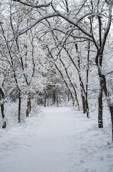 El camino en el bosque de invierno cubierto de nieve.