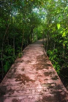 Camino en el bosque de manglar